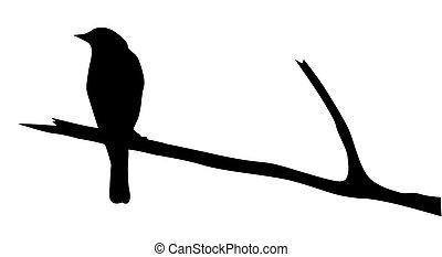 vecteur, silhouette, oiseau, branche