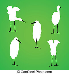 vecteur, silhouette, oiseau