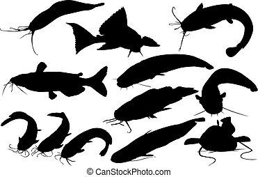 vecteur, silhouette, poisson-chat, illustration