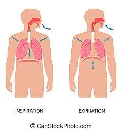 vecteur, système respiratoire