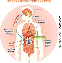 vecteur, système, tension, réponse, illustration, diagramme