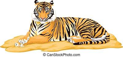 vecteur, tiger.