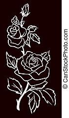 vecteur, trois, illustration, isolé, roses, fond, noir, blanc