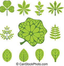 vecteur, types, feuilles, différent