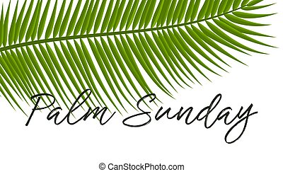 vecteur, vacances, icon., paume, chrétien, dimanche, illustration, pousse feuilles, vert