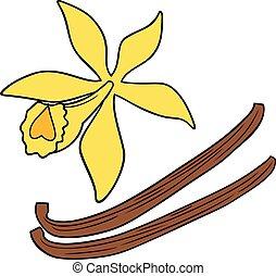 vecteur, vanille, fleur, boîtiers