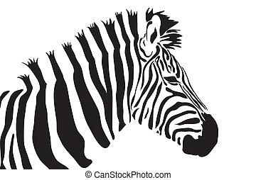 vecteur, zebra, contour