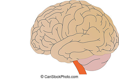Vector a brain of the person