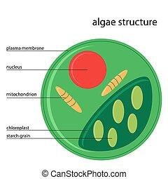 algae structure