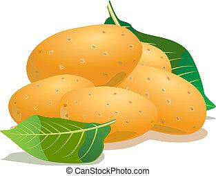 vector, aardappel, en, groen blad