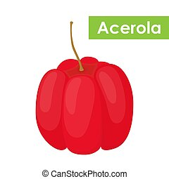 Vector acerola berry, Barbados cherry superfood, antioxidant. Cartoon flat style