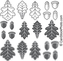 Vector acorns and oak leaves. Isolated objects on a white ...