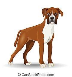 vector, aislado, perro blanco, lleno, ilustración, longitud, boxeador