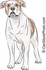 Vector. American Bulldog.