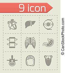 Vector Anatomy icon set