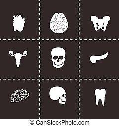 Vector anatomy icons set