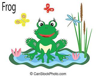Vector animal,frog