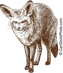 Vector antique engraving drawing illustration of bat-eared fox isolated on white background