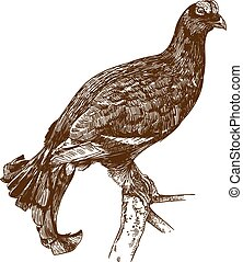 engraving drawing illustration of black grouse - Vector...