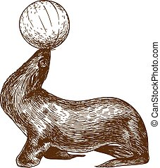 Vector antique engraving drawing illustration of circus sea lion isolated on white background