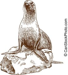 engraving drawing illustration of female sea lion - Vector ...