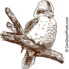 engraving drawing illustration of laughing kookaburra -...