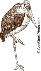 engraving drawing illustration of marabou crane - Vector...
