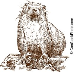 engraving drawing illustration of otter - Vector antique...