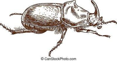 engraving drawing illustration of rhinoceros beetle - Vector...