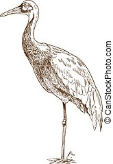 engraving drawing illustration of white naped crane - Vector...
