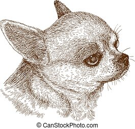 chihuahua head - Vector antique engraving illustration of...