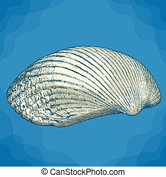 engraving illustration of clam shell - Vector antique...