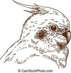 engraving illustration of cockatiel head - Vector antique...