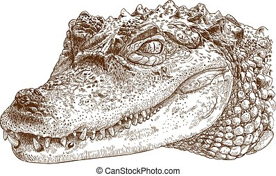 Vector antique engraving illustration of crocodile head isolated on white background