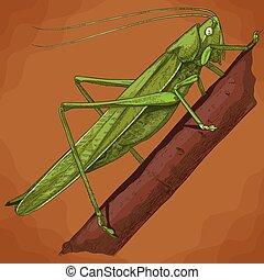 engraving illustration of grasshopper