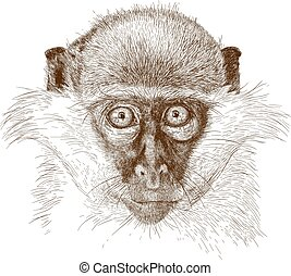 engraving illustration of green monkey muzzle - Vector...