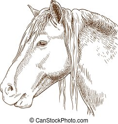 engraving illustration of horse head - Vector antique...