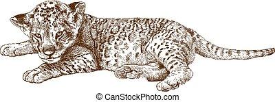 illustration of lion cub - Vector antique engraving...