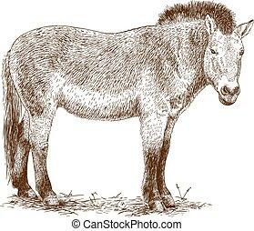 Przewalski horse - Vector antique engraving illustration of ...