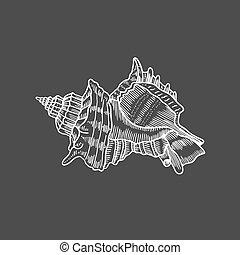 engraving illustration of spiral seashell - Vector antique...