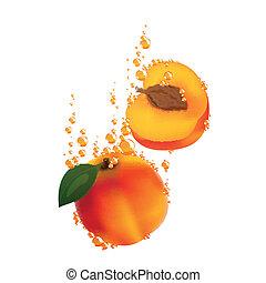 Vector Apricots Falling in Liquid - Vector Illustration of...