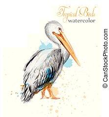 vector., aquarelle, oiseaux, pélican, coloré, tropique