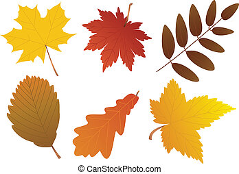 autumn leaves - vector autumn leaves