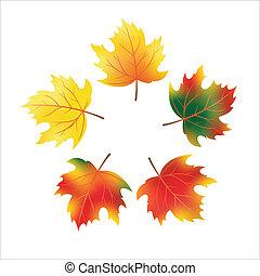 Vector autumn maple leaves