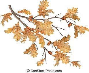 Vector autumn oak leaves branch