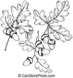 Vector autumn oak leaves. Leaf plant botanical garden floral foliage.