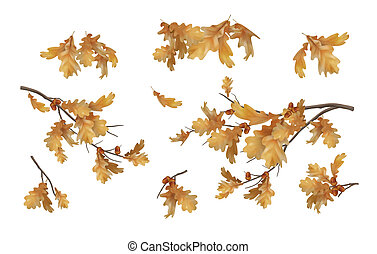Vector autumn oak leaves