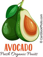 Vector avocado illustration