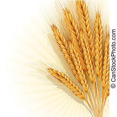 sheaf of golden wheat ears