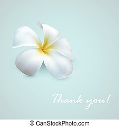 vector background with exotic frangipani flower. Thank you!